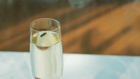 Wasp i ett exponeringsglas med en drink lager videofilmer