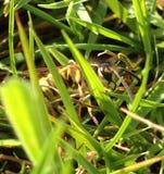 Wasp i gräset Royaltyfri Fotografi