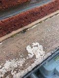 Wasp I som ses i min trädgård royaltyfri foto