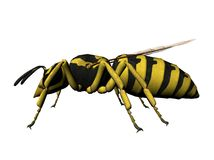 Wasp illustration. Three dimensional illustration of a wasp.  Isolated against a white background Royalty Free Stock Photo