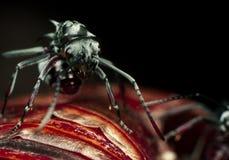Wasp jäkel royaltyfria bilder