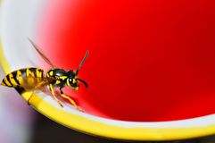 Wasp and juice Stock Photo
