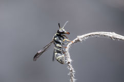 Wasp in the nature Stock Photo