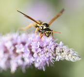 Wasp on nature. macro. In the park in nature stock photos