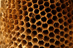 Wasp Nest. Close up view of a the details of an empty wasp nest royalty free stock photo