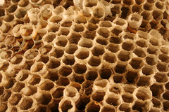 Wasp Nest. Close up view of a the details of an empty wasp nest royalty free stock photography