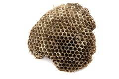 Wasp nest. Part of wasp nest isolated on the white background stock images