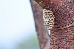 Wasp nest. On tree in forest Stock Photo