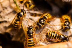 Wasp. In the nest _ Stock Images