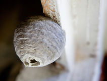 Wasp Nest. A macro of a small wasp nest stock photo