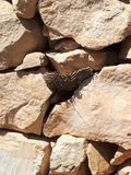 wasp nest stock images