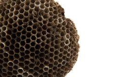 Wasp nest background Stock Photos