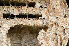 Wasp nest background royalty free stock photos