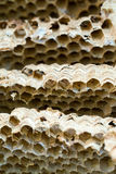Wasp nest background royalty free stock photo