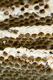 Wasp nest background. Close up of empty Wasp nest background or backdrop stock image