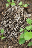 Wasp nest. Beautiful shot of wasp nest lying in soil royalty free stock images