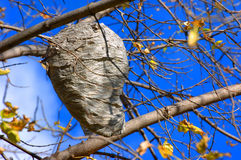 A Wasp Nest in Beautiful Sky Stock Photo