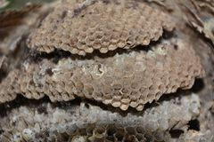 Wasp nest. A big lost Wasp nest in macro stock photography