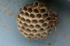 Wasp nest. Wasp building and guarding nest hidden under metal structure royalty free stock photos
