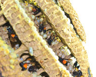 Wasp nest burning Royalty Free Stock Photos