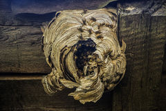 Wasp nest. Close to the enraged wasps Royalty Free Stock Photos