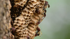 Wasp Nest stock video