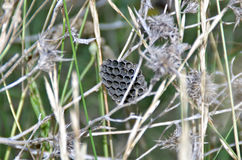 Wasp nest. Closeup view of a wasp nest royalty free stock image