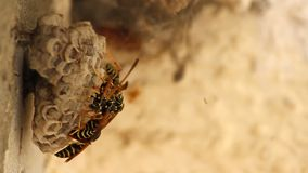 Wasp nest stock footage