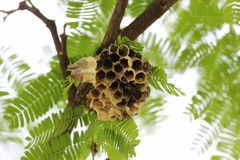 Wasp nest. The wasp nest is creative nature stock photos