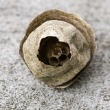 Wasp nest Royalty Free Stock Photo