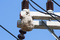 Wasp nest. Hang on electricity post stock photos
