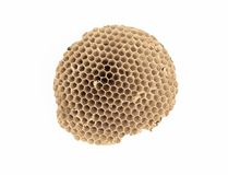 Wasp nest isolated on white background. royalty free stock photo