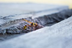Wasp in nest, macro insect in wild. Wasp in nest, insect in wild life, animal in nature, cloes-up wasp on nest royalty free stock images