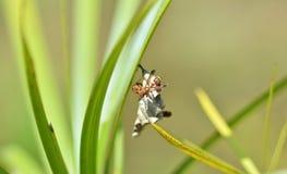 Wasp nest Royalty Free Stock Image