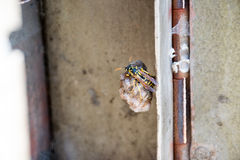 Wasp nest. In the post box royalty free stock photo