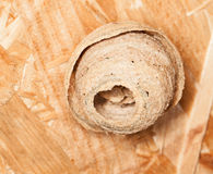 Wasp Nest. A small active wasp nest hanging royalty free stock images