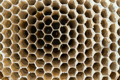 Wasp nest texture background royalty free stock images