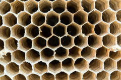 Wasp nest texture background stock image