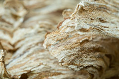 Wasp nest texture background stock images