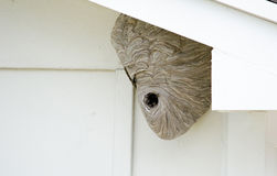 Wasp nest under the eaves. A huge wasp nest filled with wasps sits majestically under the eves of a garage royalty free stock photography