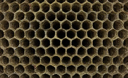 Wasp nest. A wall of empty cells of a wasp nest or a beehive royalty free stock photography