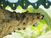 Wasp nest. With wasps at house stock photos