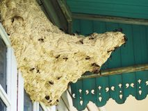 Wasp nest. With wasps at house royalty free stock photo
