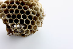 Wasp Nest on white Royalty Free Stock Photography