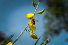 Wasp och blomma Arkivbilder