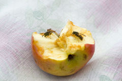 Wasp på äpplet Arkivfoton