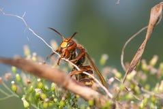 Wasp på en växt Royaltyfri Foto