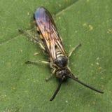 Wasp på leafen Arkivfoto