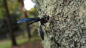 Wasp på trädet arkivbild