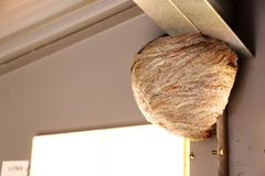 Wasp paper nest. Royalty Free Stock Image